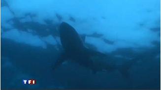 Outside shark