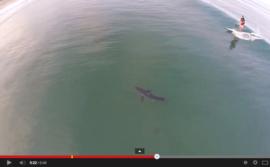Petite vague, beau requin