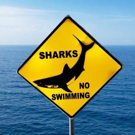 Un kitesurfer attaqué par un requin à Tahiti