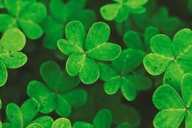 Fêtez la Saint Patrick avec Flysurf.com