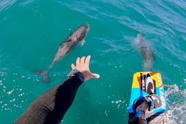 Du kitesurf avec des dauphins !